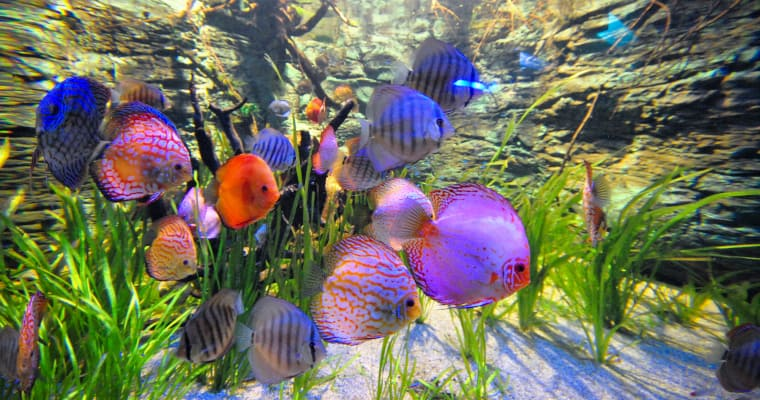 adding fish to a planted tank