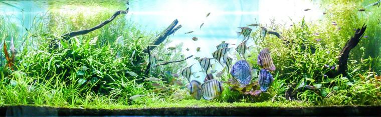basics of a planted aquarium