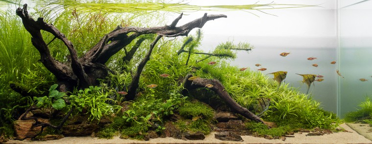 choose your aquarium live plants