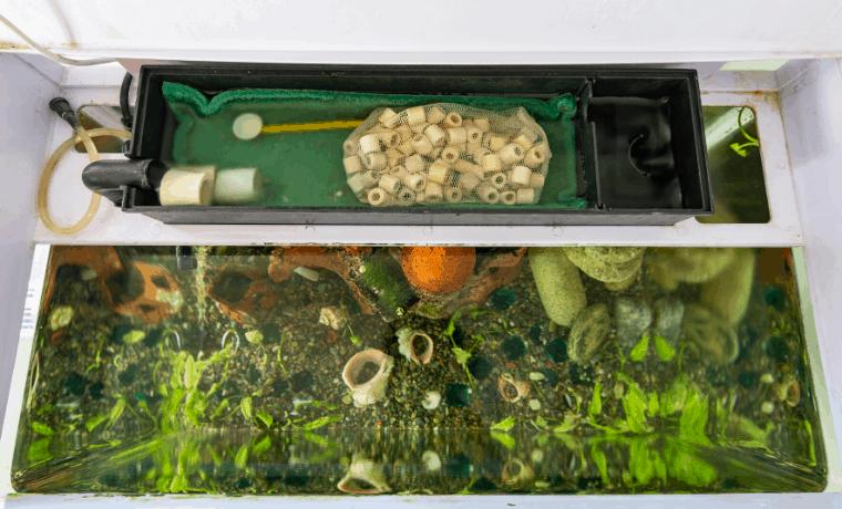equipment for planted aquarium