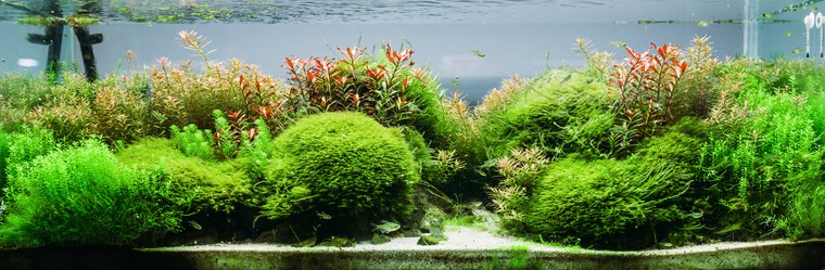 maintain your planted tank
