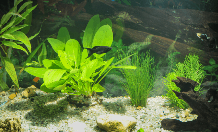 easy aquarium plants for beginners