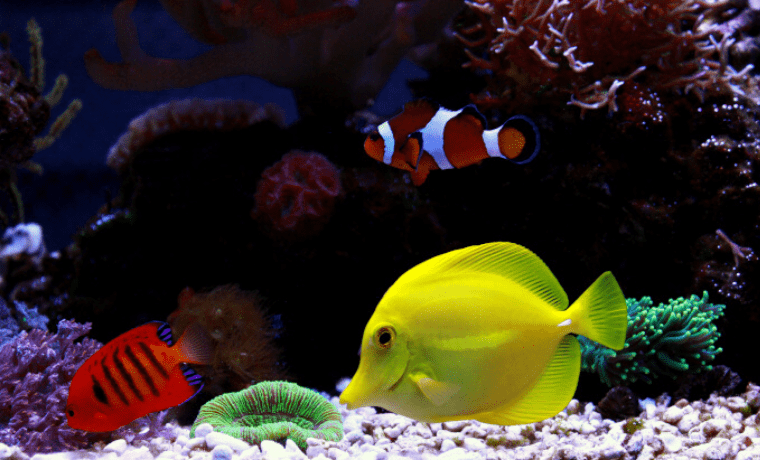 saltwater aquarium fish for beginners
