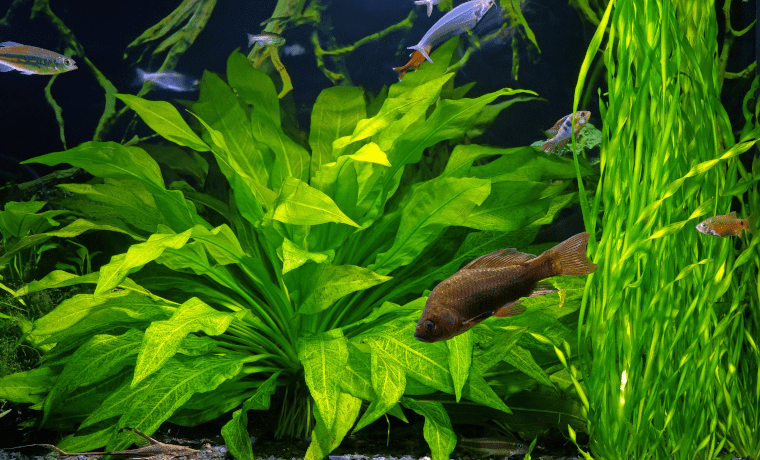 low light plants for aquarium