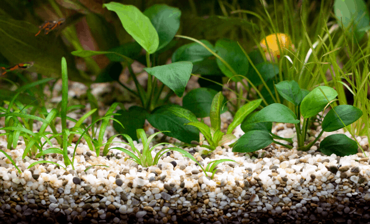 Best Substrates For Planted Tank
