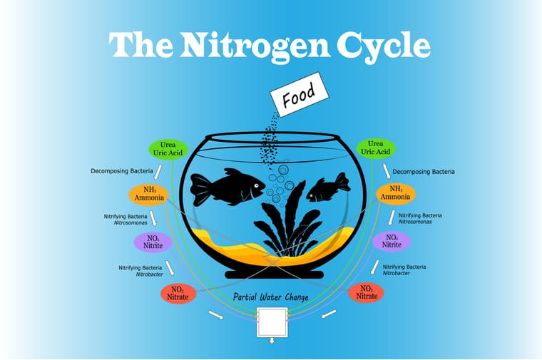 aquarium nitrogen cycle diagram