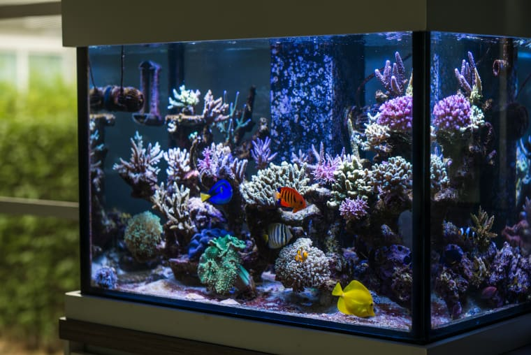 Set Up Saltwater Aquarium