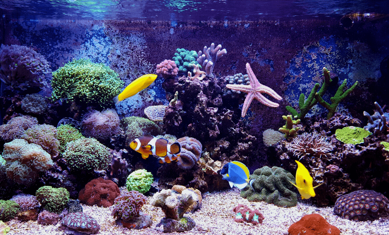 Start A Saltwater Aquarium