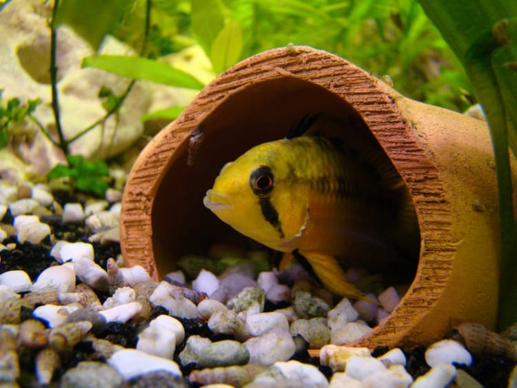 hiding spaces for small fish