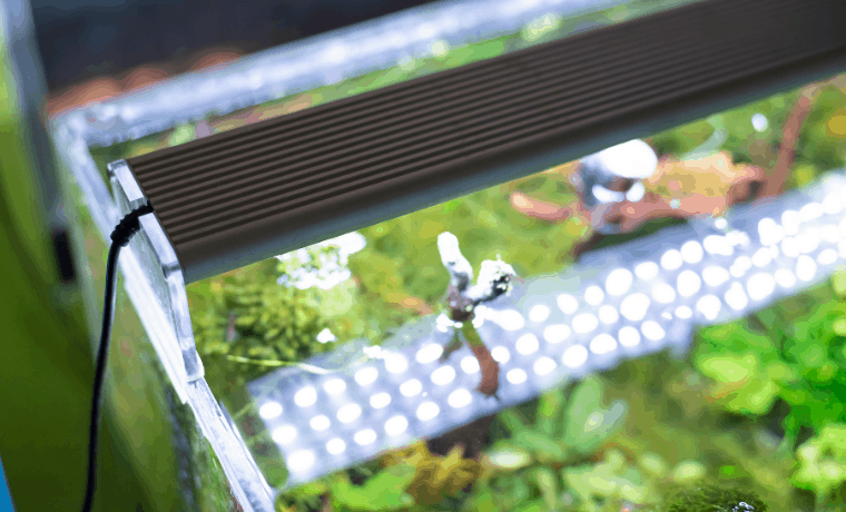 Best LED Lights for Your Planted Aquarium
