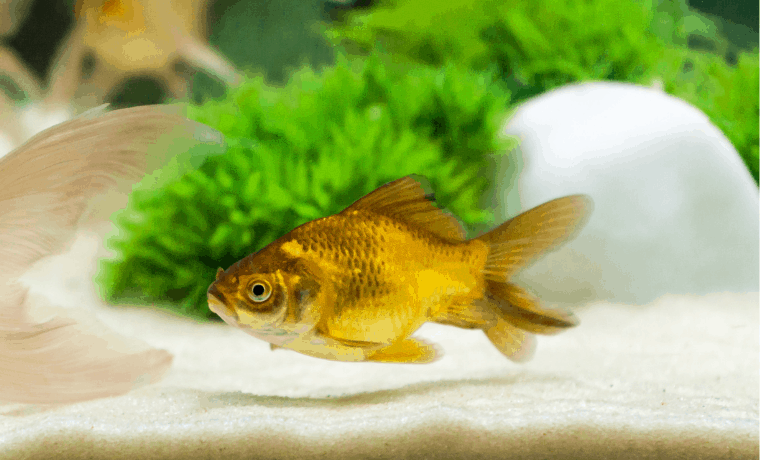 Best Aquarium Sands