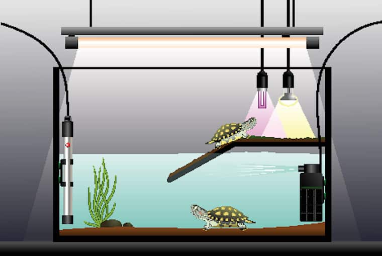 types of filters for turtle tank