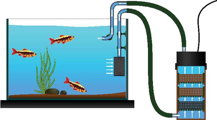 Turtle Tank Filtration