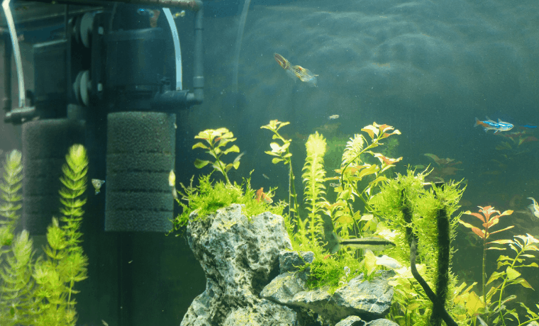 Best Shrimp Tank Filter