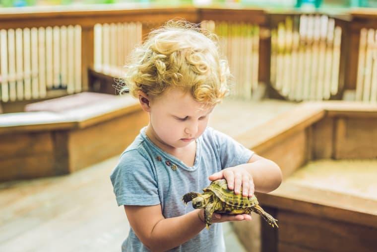 Enrichment for Turtle through Interaction