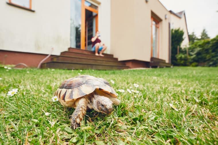 Exterior Environment Enrichment for Turtle