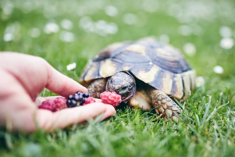 Food Enrichment for Turtle