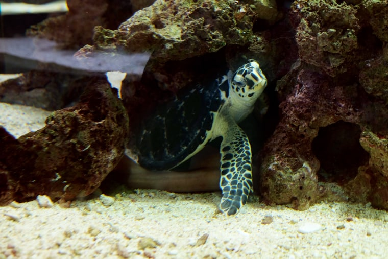 Internal Environment Enrichment for Turtle